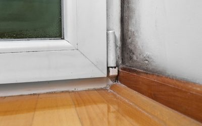 Six Ways to Prevent Mold In Your Home