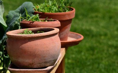 Tips and Tricks for Container Gardening